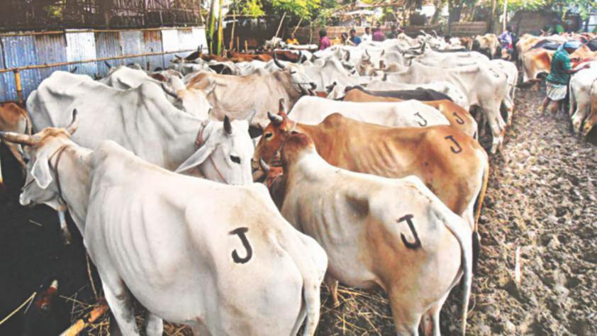 Cattle truck hijacked in Dhaka