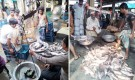 টানা হরতাল-অবরোধে বিপাকে পাবনার মাছ চাষিরা